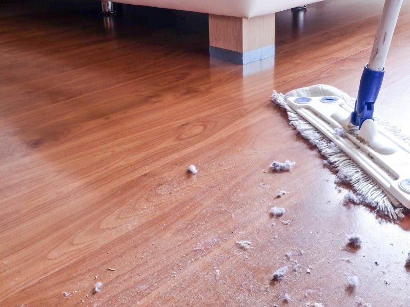 Acari della polvere in casa: come rimuoverli