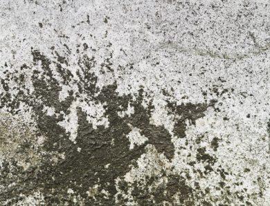 Come eliminare il lichene